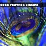 Peacock Feather Jigsaw